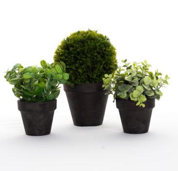 Petites plantes décoratives
